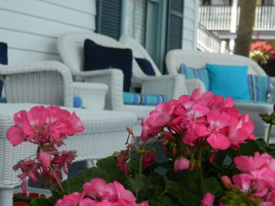 Outdoor porch sitting area with pretty pink flowers
